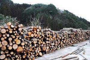 里山広葉樹活用プロジェクト03