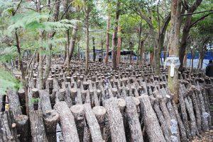 里山広葉樹活用プロジェクト06